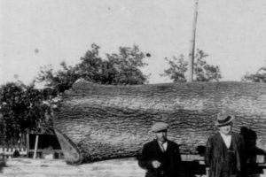Il lavoro dei carronesi dai campi alla fabbrica